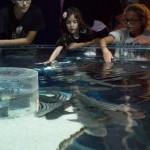 Visite des Requins au Musée Océanographique de Monaco